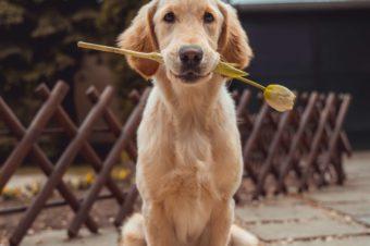 Perros buenos bienvenidos